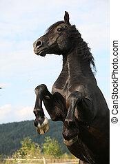 сердитый, черный, лошадь, пастьба