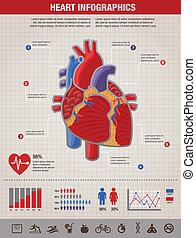 сердце, болезнь, атака, infographic, человек, здоровье