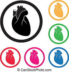 сердце, значок, вектор, человек, cardio