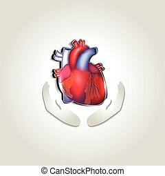 сердце, символ, здоровье, человек, забота