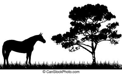 силуэт, лошадь, дерево