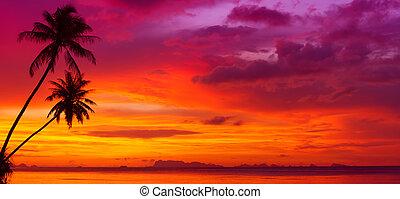 силуэт, панорама, над, trees, океан, тропический, закат солнца, пальма