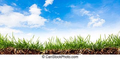 синий, весна, небо, зеленый, свежий, трава