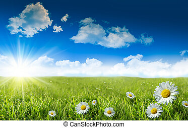 синий, дикий, трава, небо, daisies