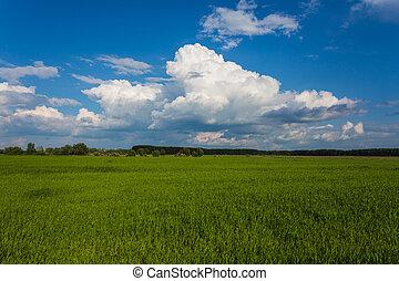 синий, зеленый, трава, небо, луг