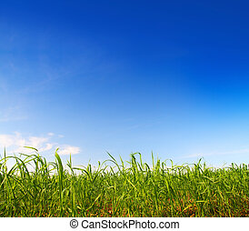 синий, зеленый, трава, небо, под