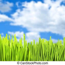 синий, зеленый, трава, небо, против
