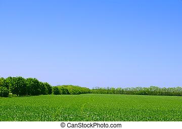 синий, лето, поле, sky., зеленый, лес, задний план, пейзаж
