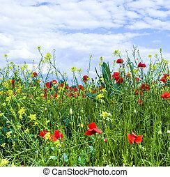 синий, луг, небо, желтый, цветы, poppys
