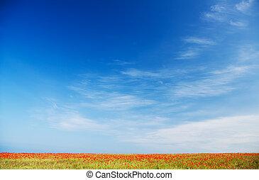 синий, мак, небо, против, поле