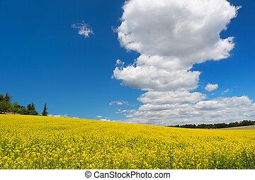 синий, масло, небо, против, поле, семя, изнасилование