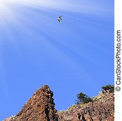 синий, над, небо, против, rocks, soaring, птица
