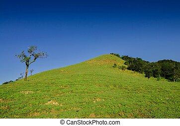 синий, небо, зеленый, холм