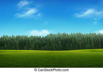 синий, небо, молодой, пейзаж, зеленый, лес