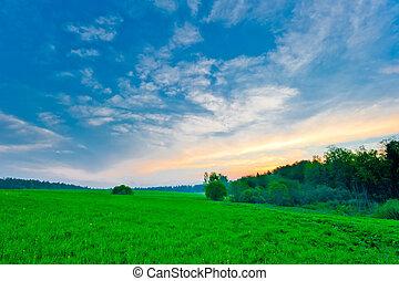 синий, небо, яркий, зеленый, свежий, трава