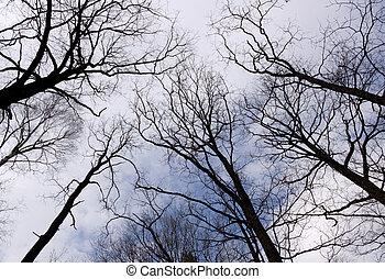 синий, небо, trees, темно, silhouettes, против