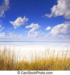 синий, пляж, dunes, небо, океан, песок, белый, трава