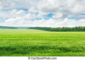 синий, поле, небо, зеленый