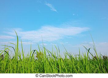 синий, поле, небо