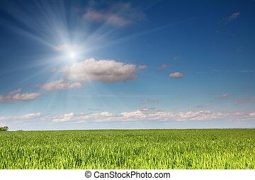 синий, поле, под, небо, пшеница