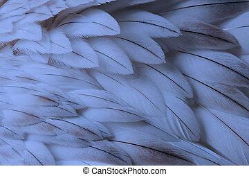 синий, пушистый, крупным планом, перо