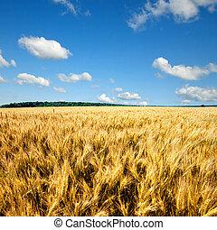 синий, пшеница, небо, желтый, поле, против, clouds