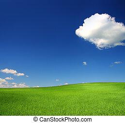 синий, пшеница, небо, зеленый, холм, под