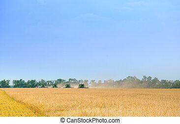 синий, пшеница, небо, 4, поле, harvesters, скомбинировать, под, harvesting