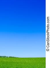 синий, пшеница, sky., поле, зеленый, задний план, пейзаж