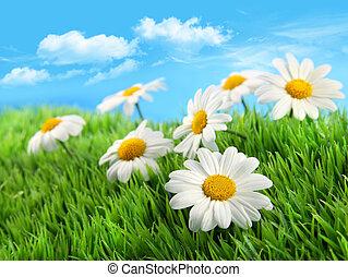 синий, трава, небо, daisies, против