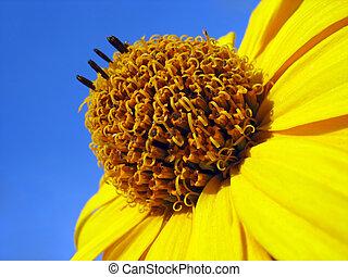 синий, цветок, небо, желтый, против, задний план