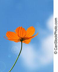 синий, цветок, небо