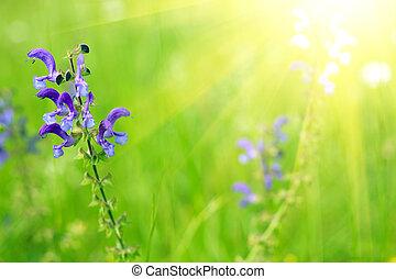 синий, шалфей, солнечный лучик