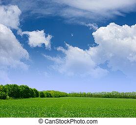 синий, широкий, clouds, небо, трава, поле, зеленый, лес