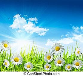 синий, яркий, трава, небо, daisies