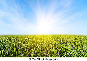 синий, clouds, луг, небо, зеленый, трава