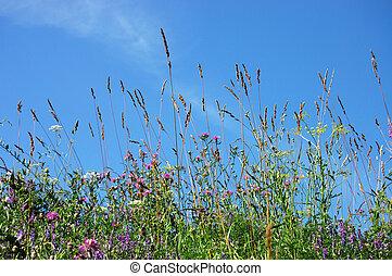 синий, clouds, небо, трава, зеленый, белый