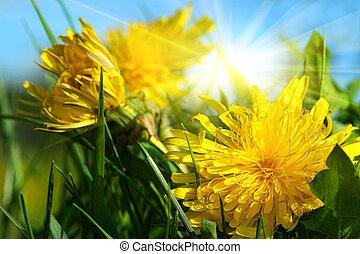 синий, dandelions, небо, трава, против