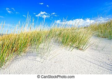 синий, dunes, небо, песок, белый, трава, пляж