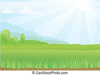 синий, rays, sky., солнечный свет, иллюстрация, поле, зеленый