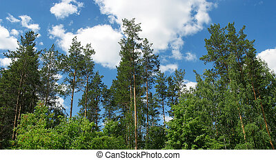 синий, sky., панорама, tops, сосна, против
