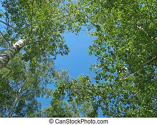 синий, tops, небо, против, задний план, береза
