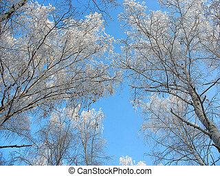 синий, tops, небо, против, морозный, задний план, береза