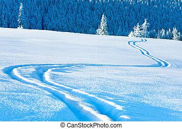 след, лыжа, behind., ель, снег, поверхность, лес