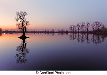 словакия, дерево, озеро, восход