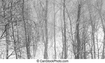 снег, trees, лес, новый, covered, falling