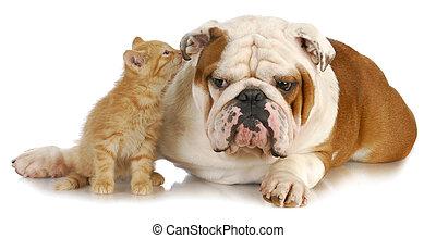 собака, кот