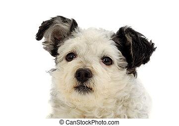 собака, лицо
