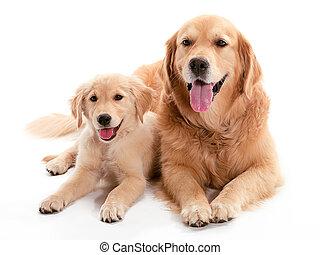 собака, buddys
