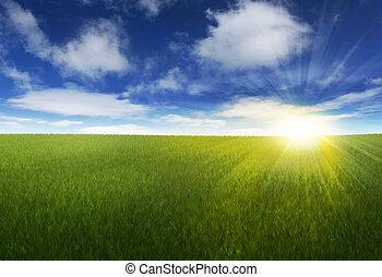 солнечно, над, небо, травянистый, поле